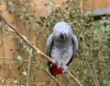Parrots at zoo separated after swearing profusely at visitors