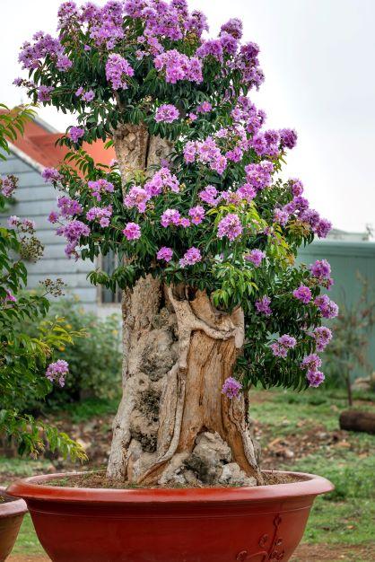 Surprising Advantages of Contemporary Outdoor Planters