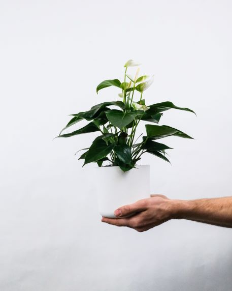 Common Materials Used for Modern Vases